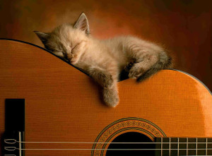 cat-sleep-guitar-gitarist-kiev-ua