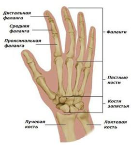 stroenie-ruki-gitarist-kiev-ua